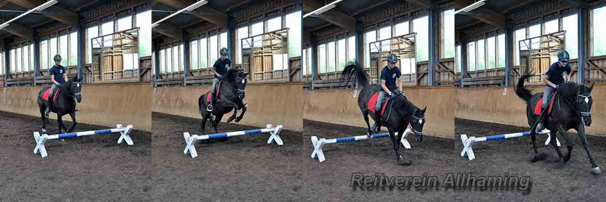 reitclub allhaming.at
